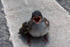 【小小鳥兒要回家】